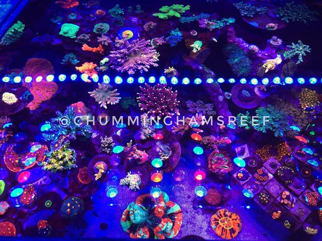 rafa koralowce oświetlenie akwarium
