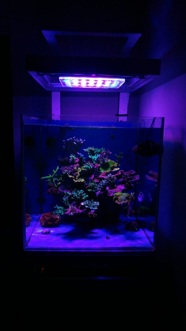 最高のサンゴ水族館の照明