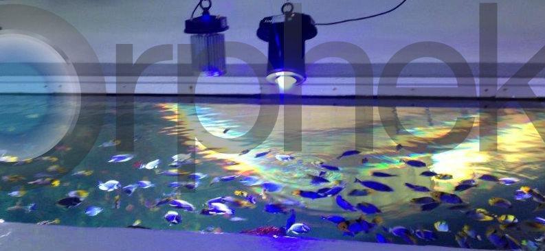 meilleur éclairage LED d'aquarium d'eau de mer