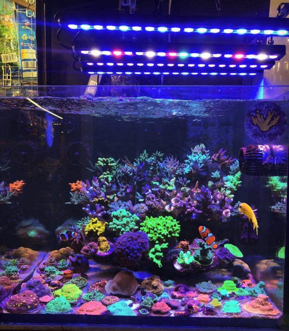 orphek OR2 reef tank led stip