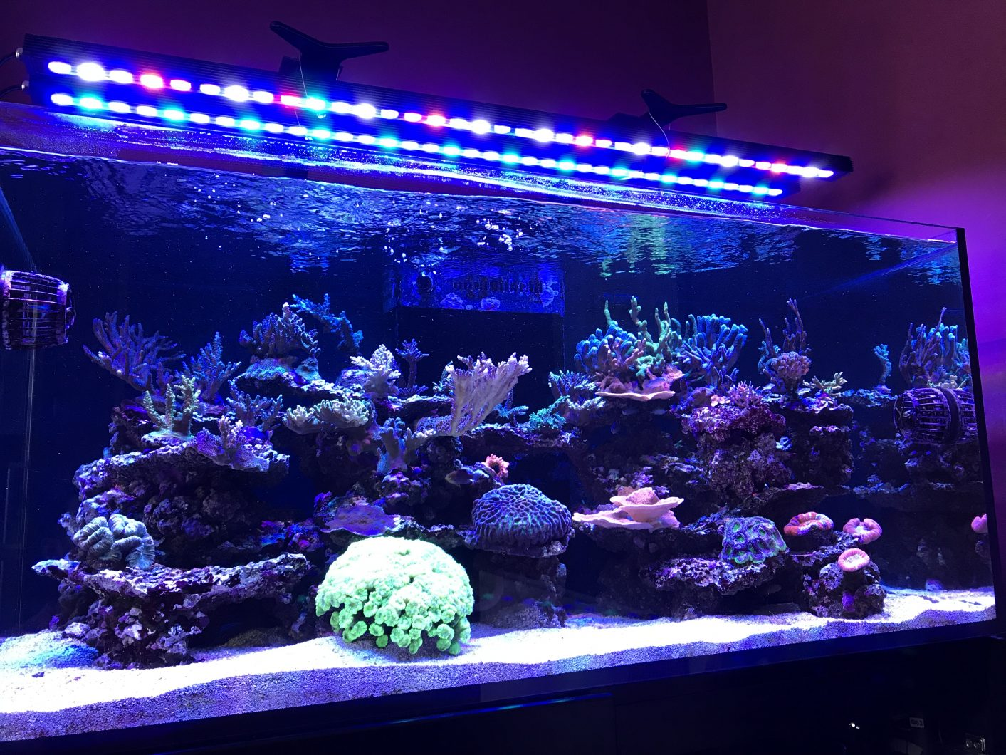 best coral growing led bar 2020