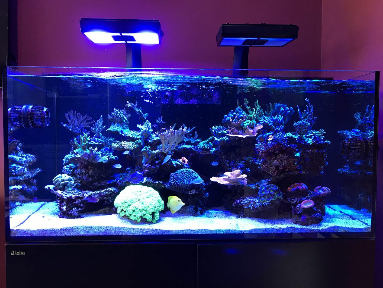 أفضل إضاءة الشعاب المرجانية 2020
