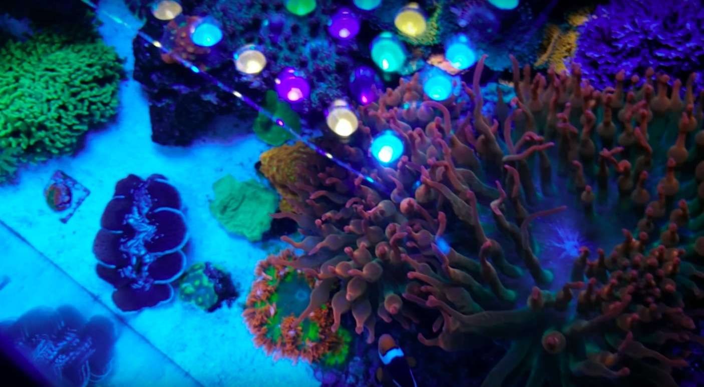 beautiful saltwater aquarium corals