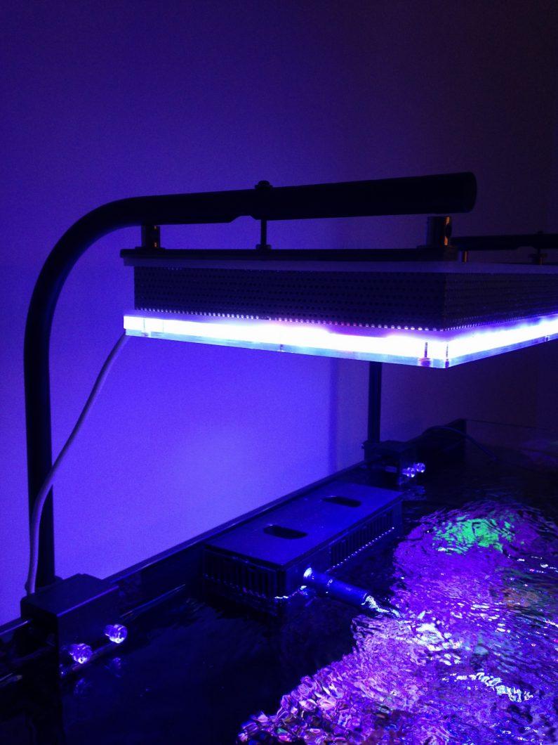 أفضل إضاءة حوض السمك الألوان المرجانية