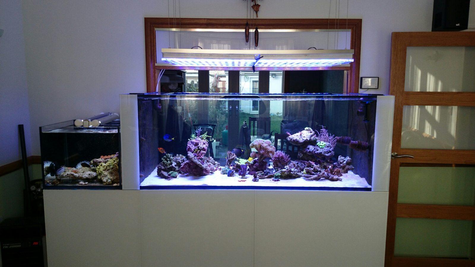 pencahayaan akuarium berkualiti tinggi