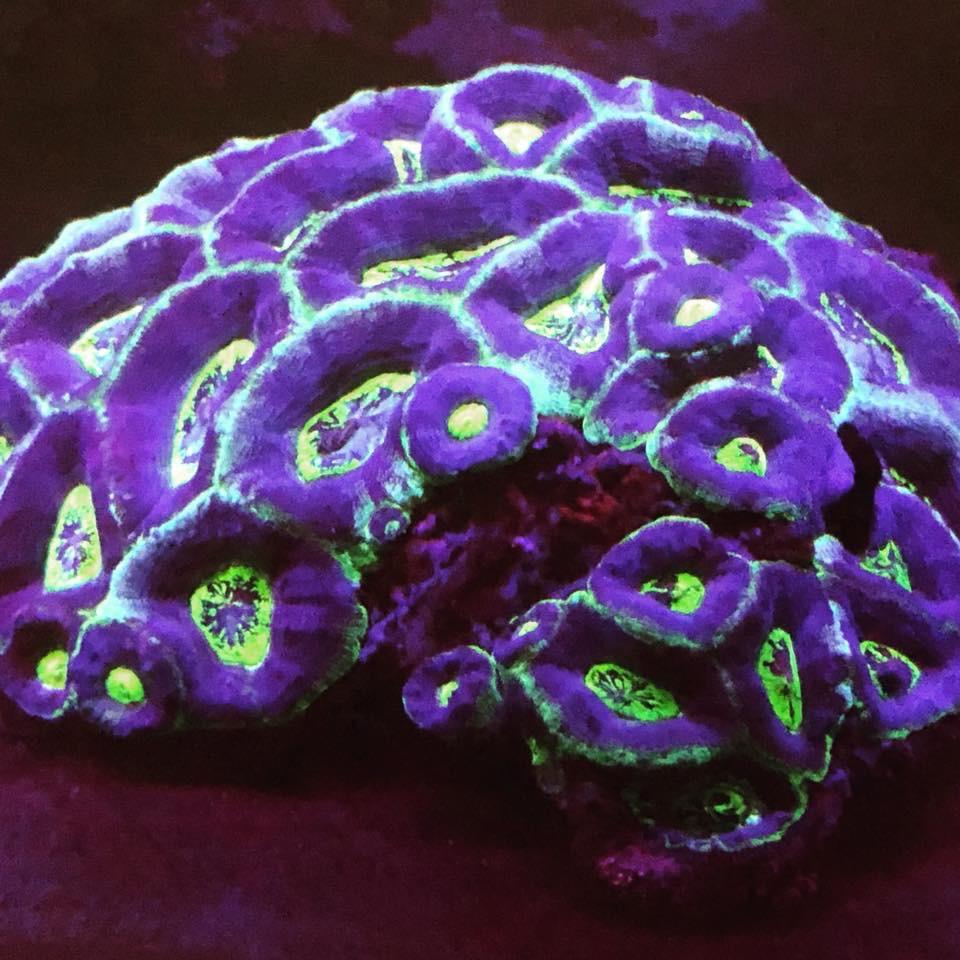 התאורה הטובה ביותר לגידול אלמוגים באקווריום