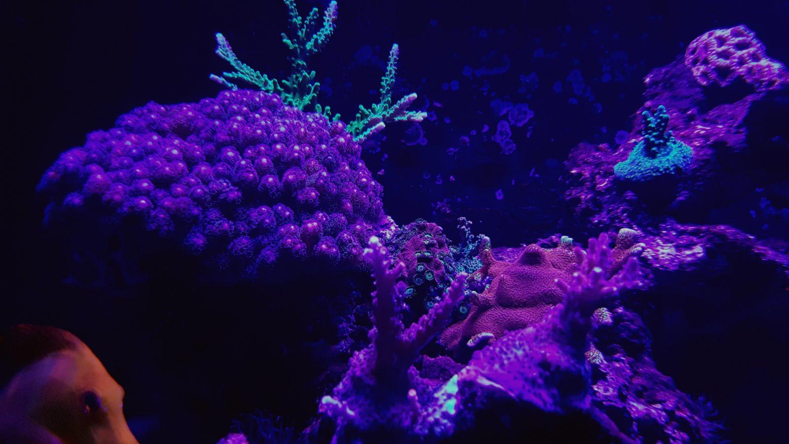 belos corais coloridos levou iluminação