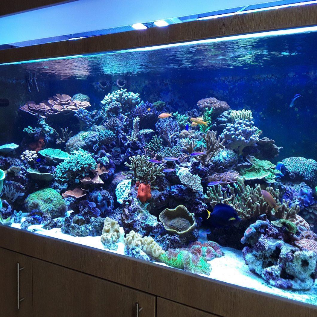 migliori luci a led del serbatoio di barriera corallina