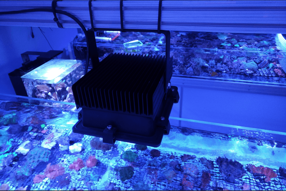 lighting for coral reef aquarium