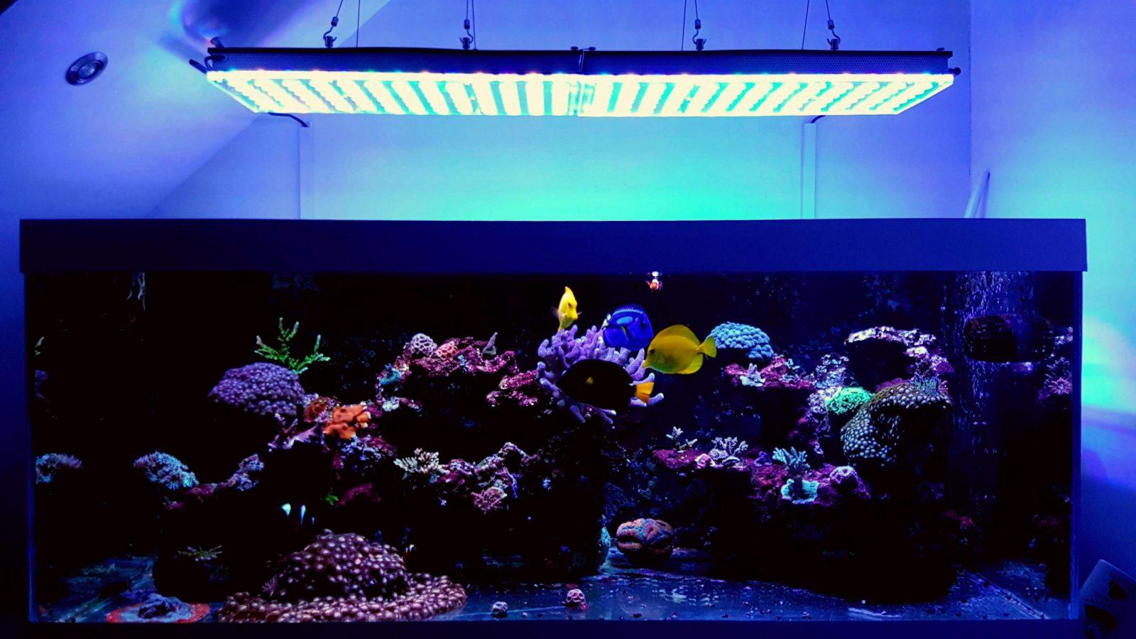 top corais de aquário levou iluminação