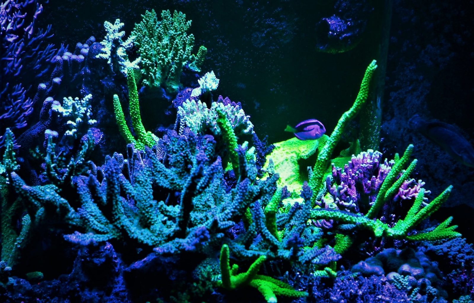 led lighting for colorful reef corals