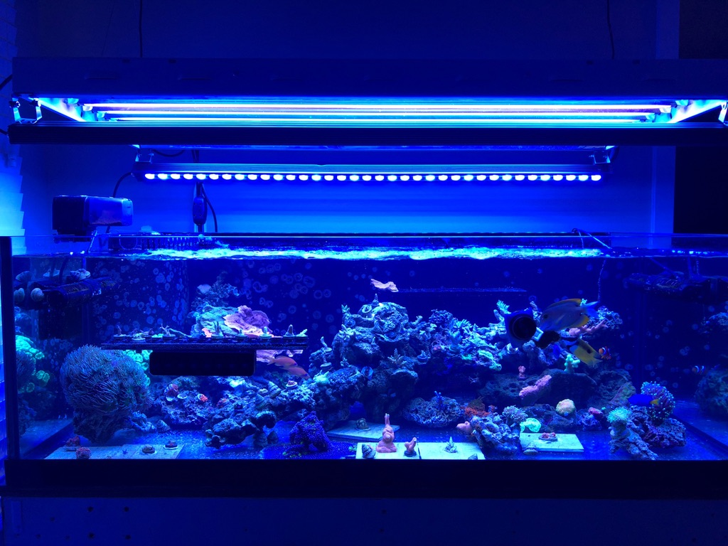 orphek OR2 LED-strip