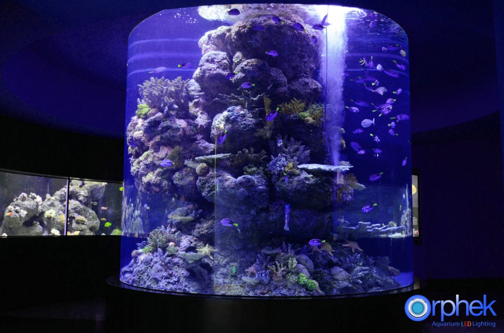 corals tank LED lighting