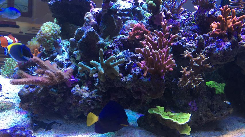 2020 top reef tank lighting
