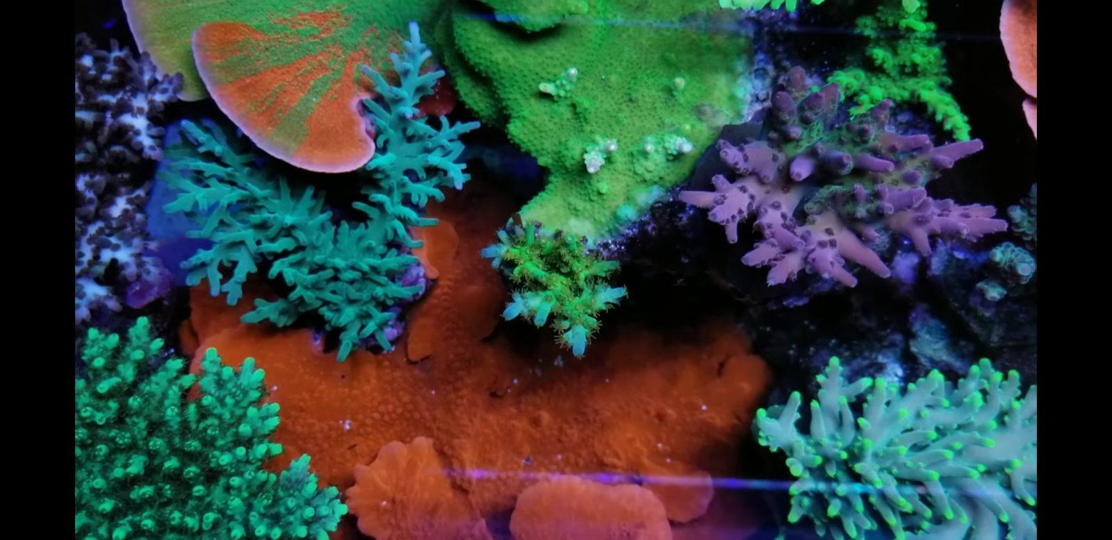 最好的珊瑚缸LED照明