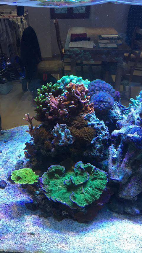 cores incríveis de corais