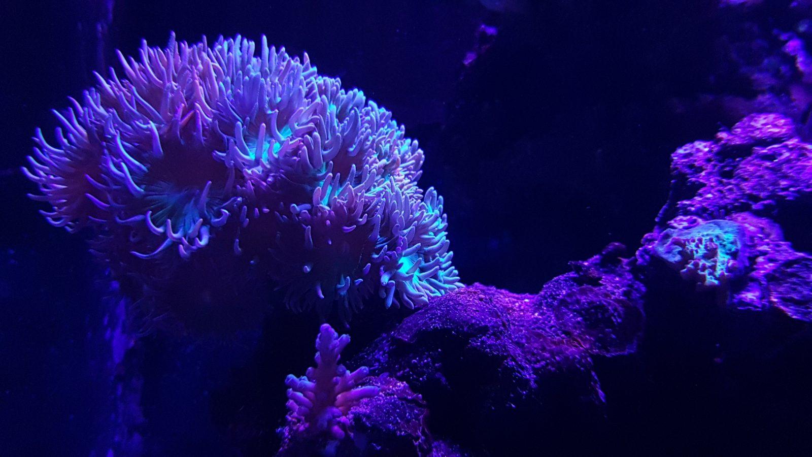 melhor iluminação para um belo crescimento de corais