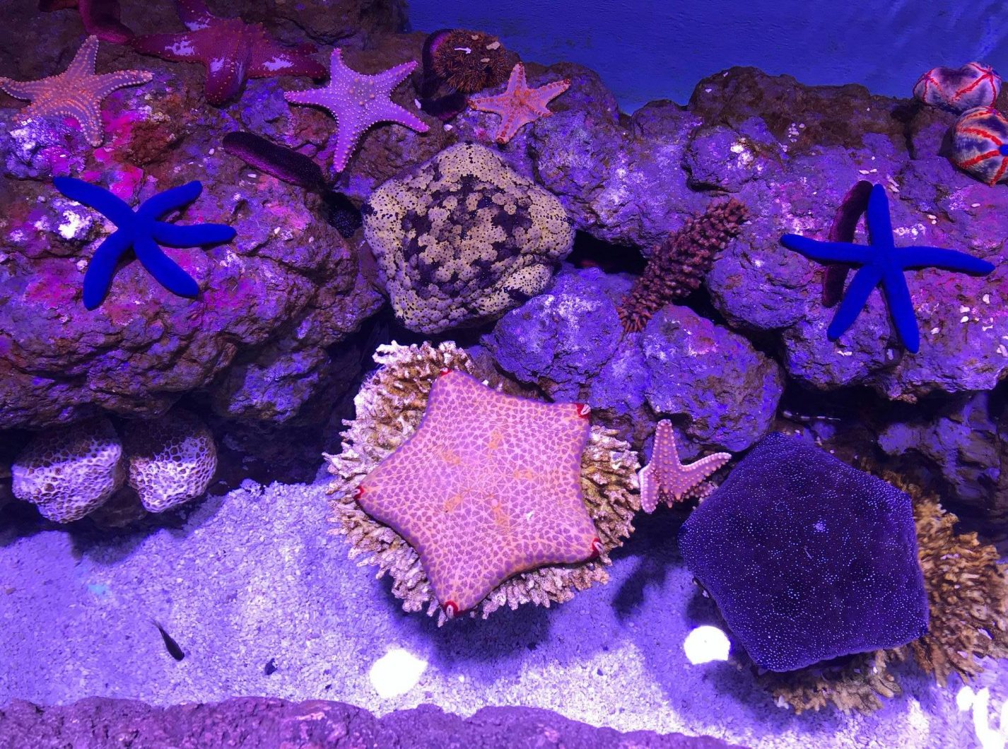best led lighting for colorful corals