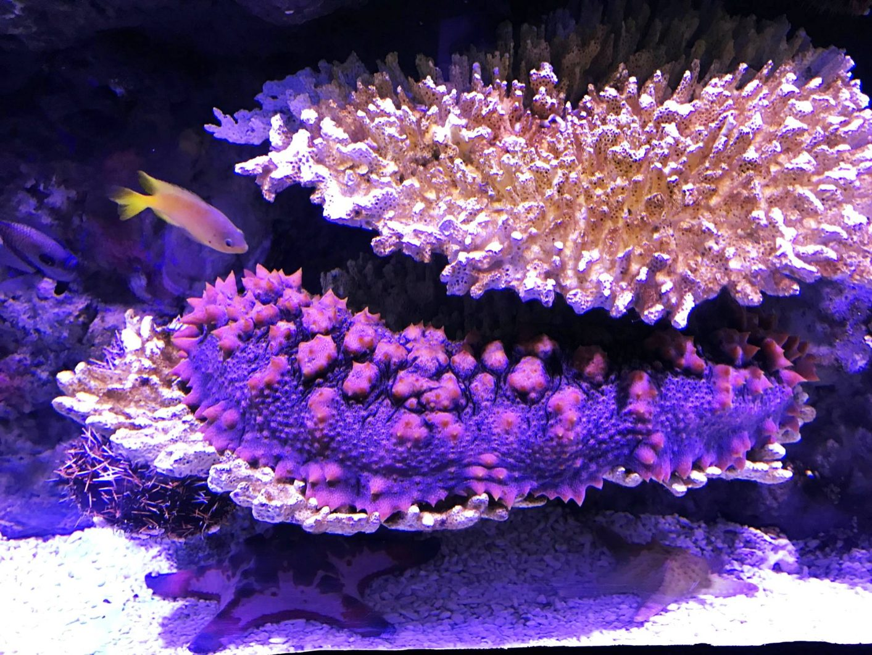 φωτισμός δεξαμενής κοραλλιογενών κοραλλιών