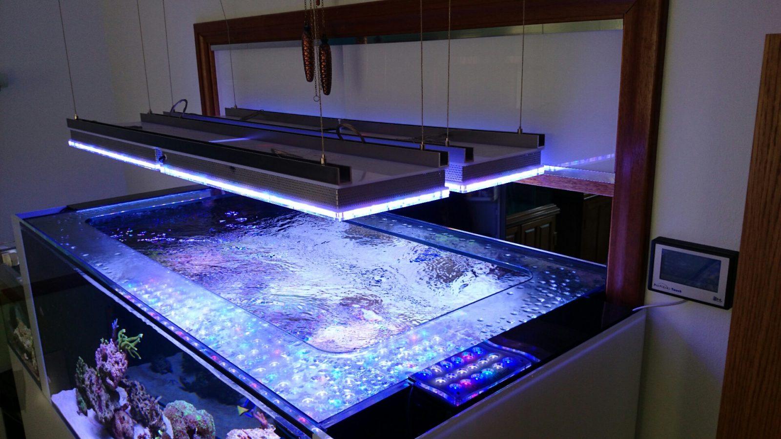 illuminazione acquario d'acqua salata superiore