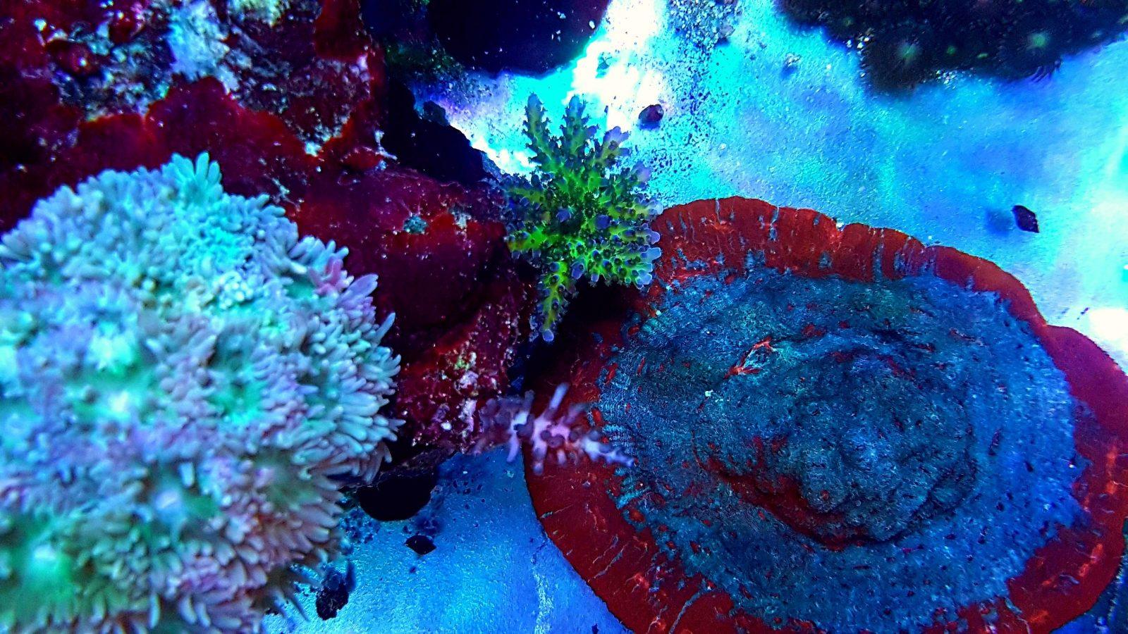 coral pop melhor iluminação led