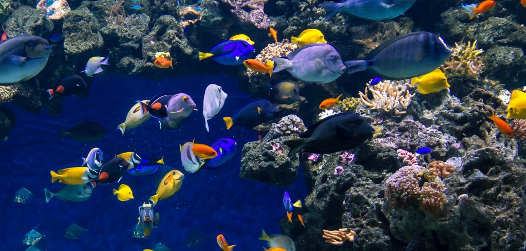 освещение аквариума экзотических рыб