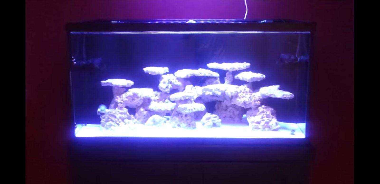 大西洋v4水族馆灯