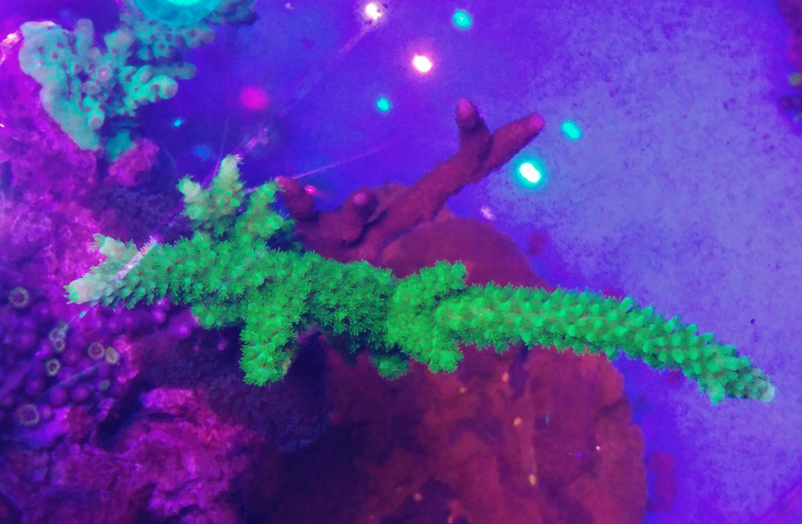2020年最高のサンゴ水槽照明