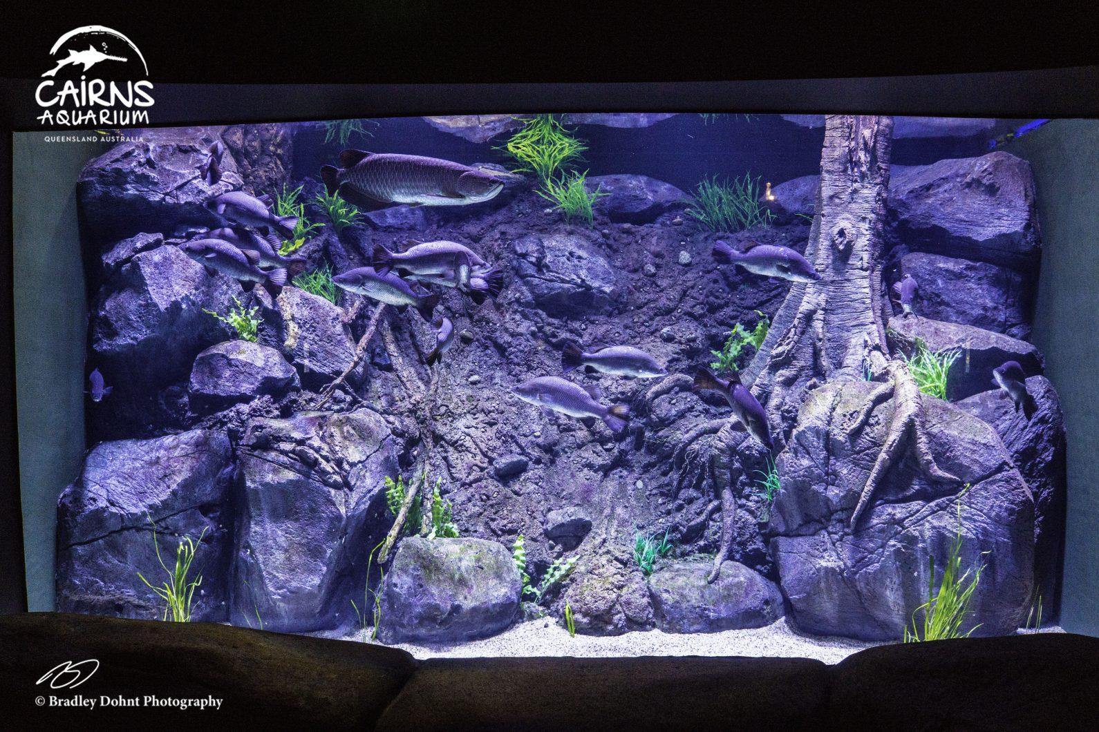 வலுவான நன்னீர் மீன் விளக்குகள்