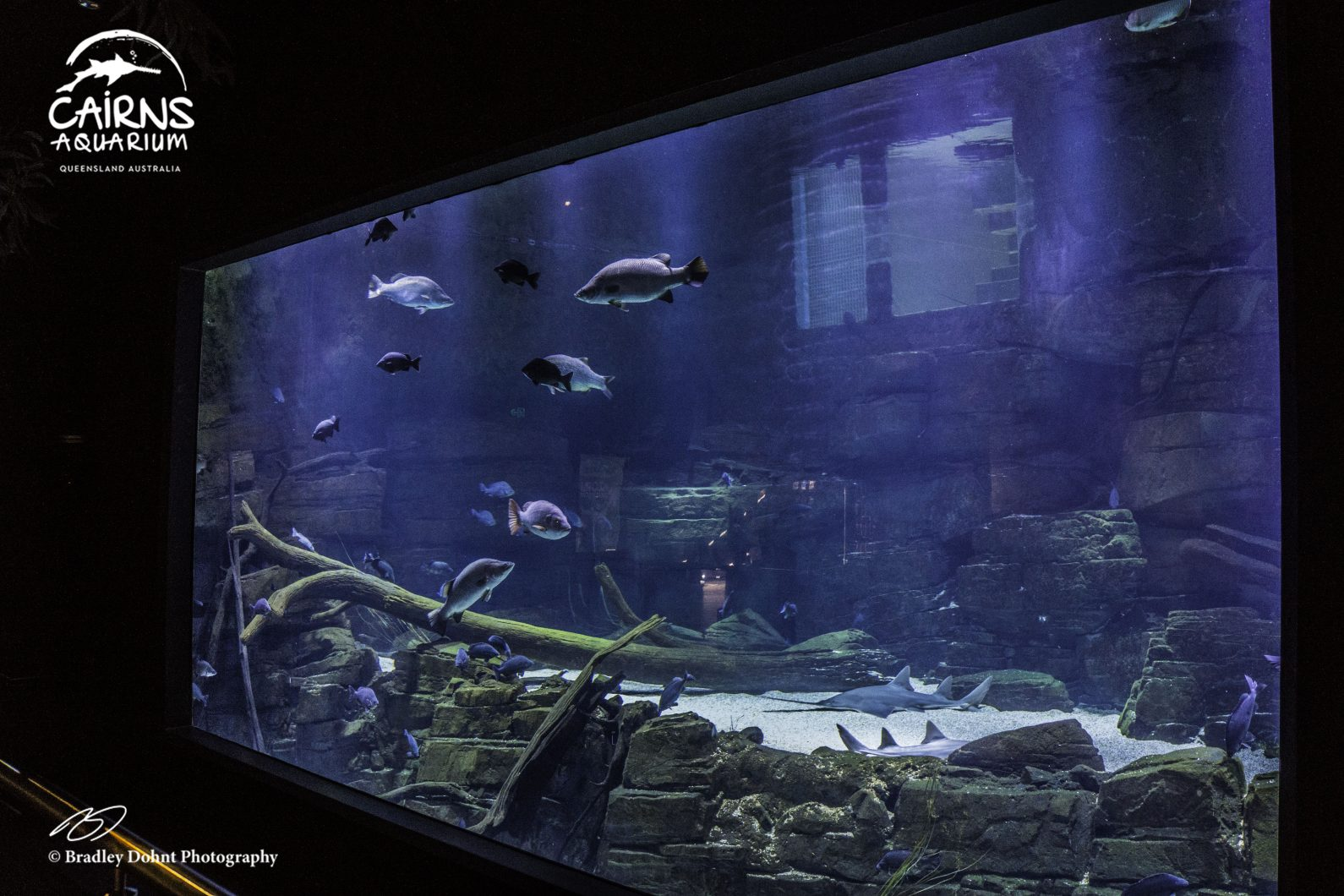 éclairage LED d'aquarium public