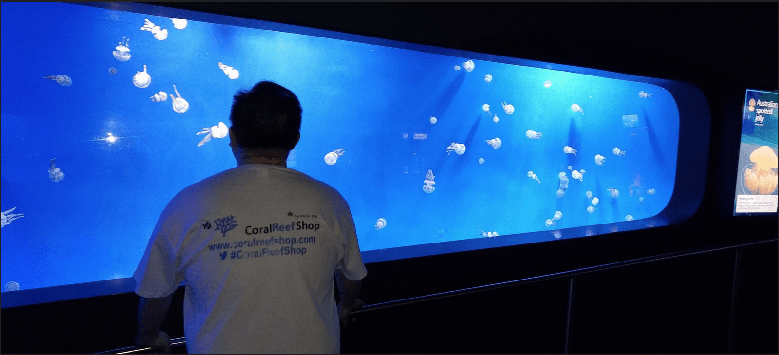 jellyfish tank led lighting