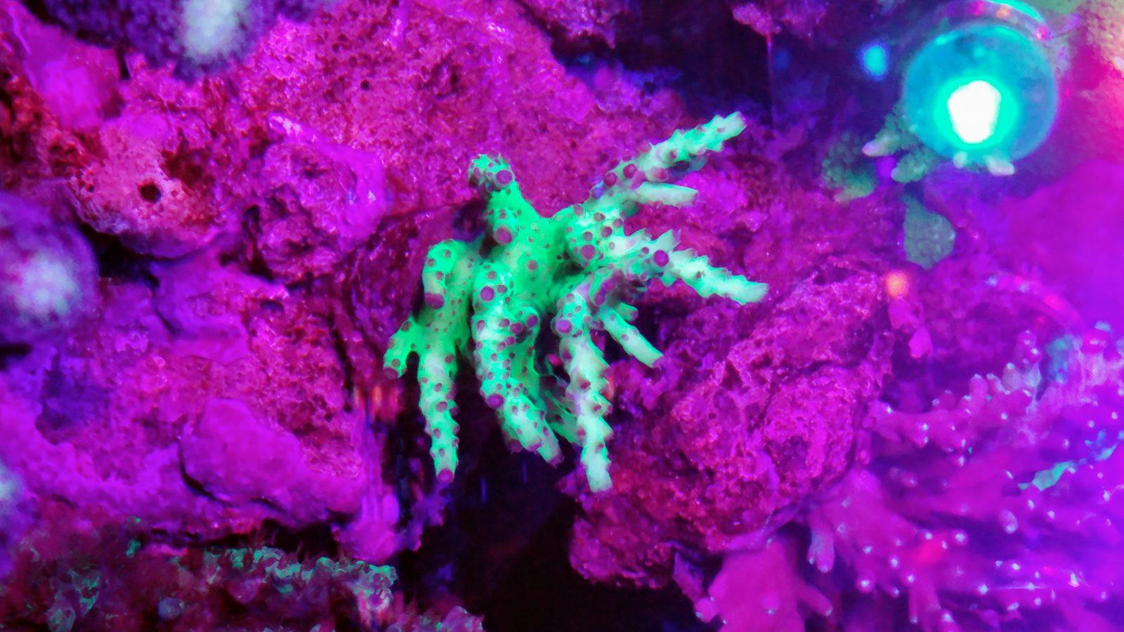 最もよいspsの珊瑚は照明を導きました