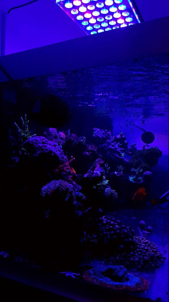 recife coral tanque iluminação orphek