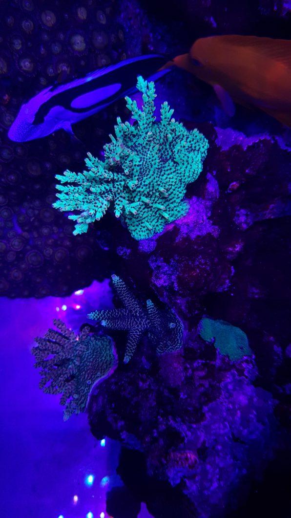melhor iluminação pop coral