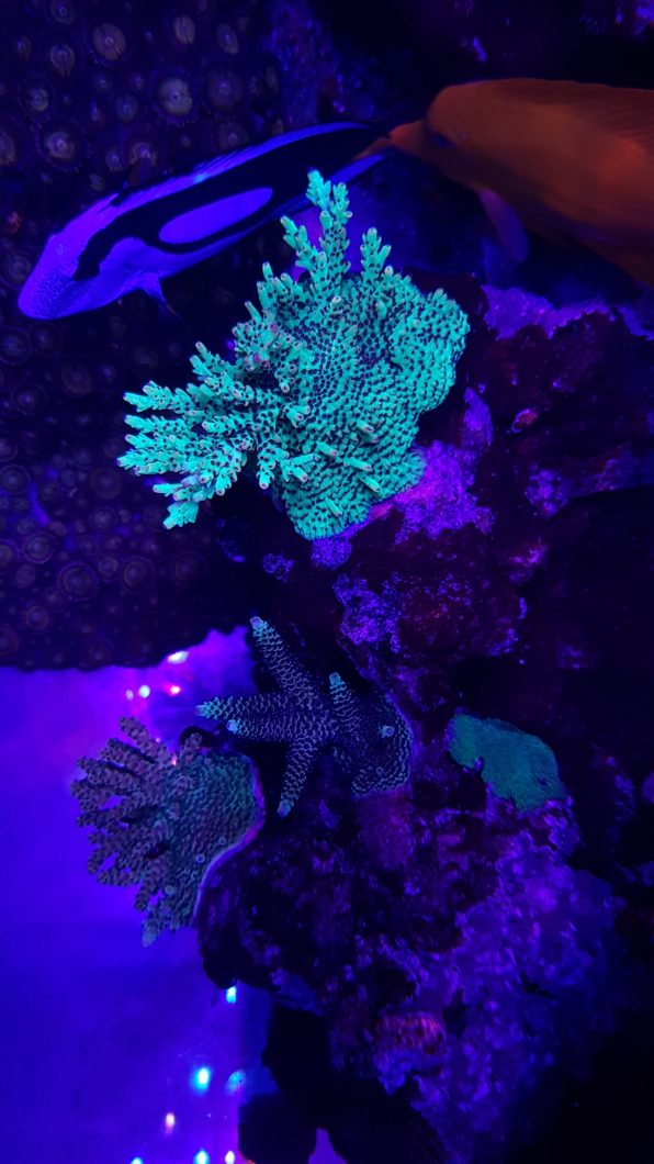 lampu pop karang paling apik