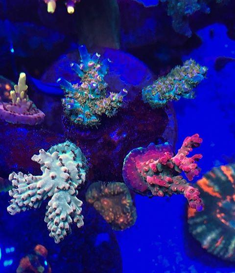 מיטב אלמוגי האקווריום תאורת LED 2020
