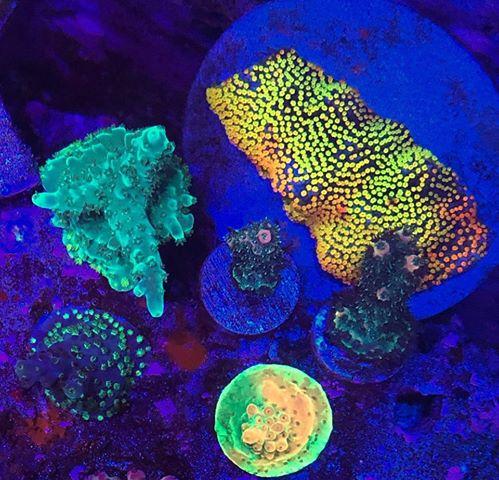 תאורת led הטוב ביותר באקווריום אלמוגים