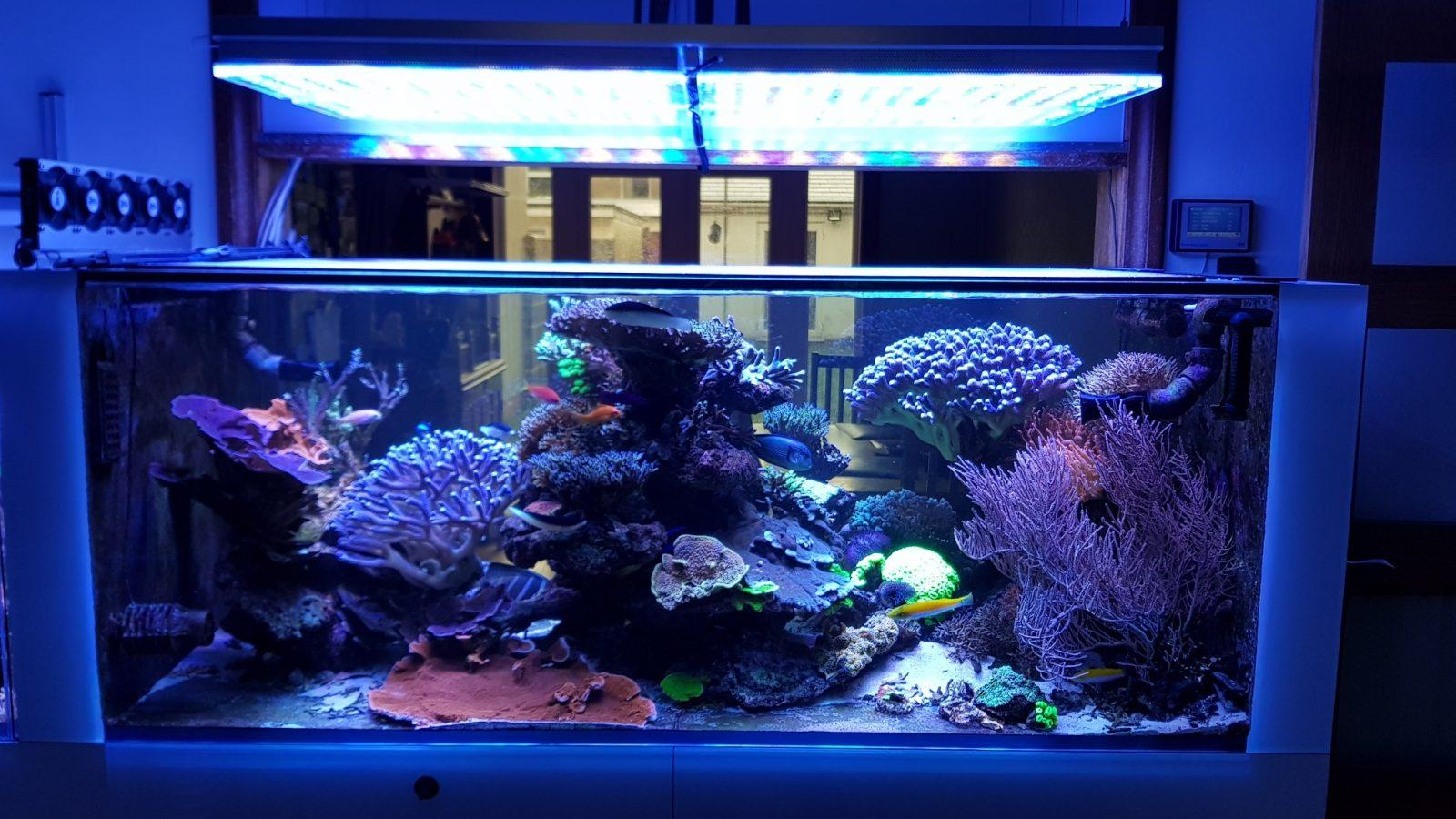i migliori colori di illuminazione a LED dell'acquario di barriera corallina