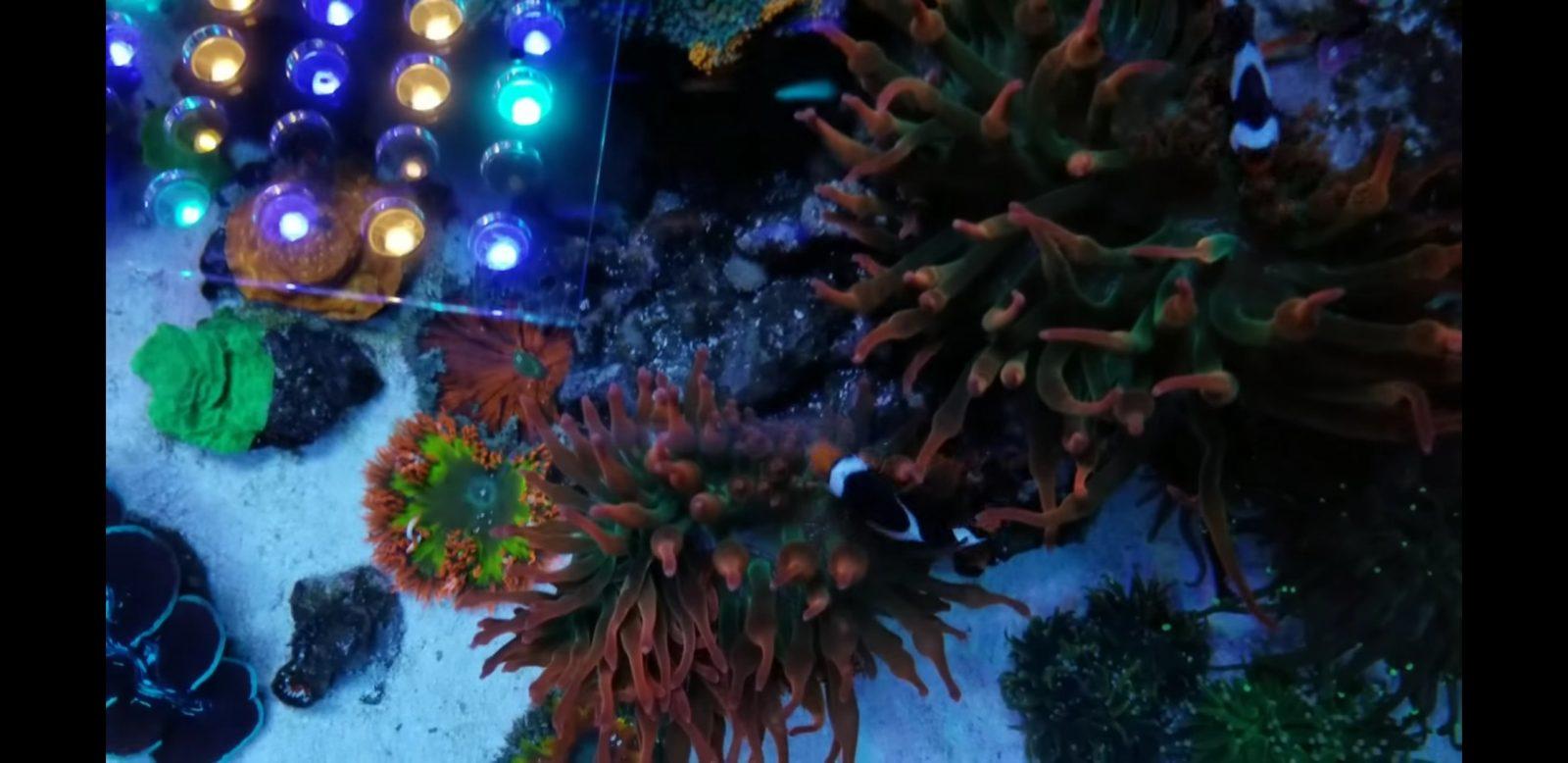 大西洋V4最佳水族馆灯
