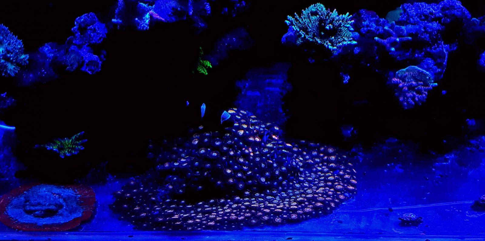 iluminação do tanque de recife de água salgada