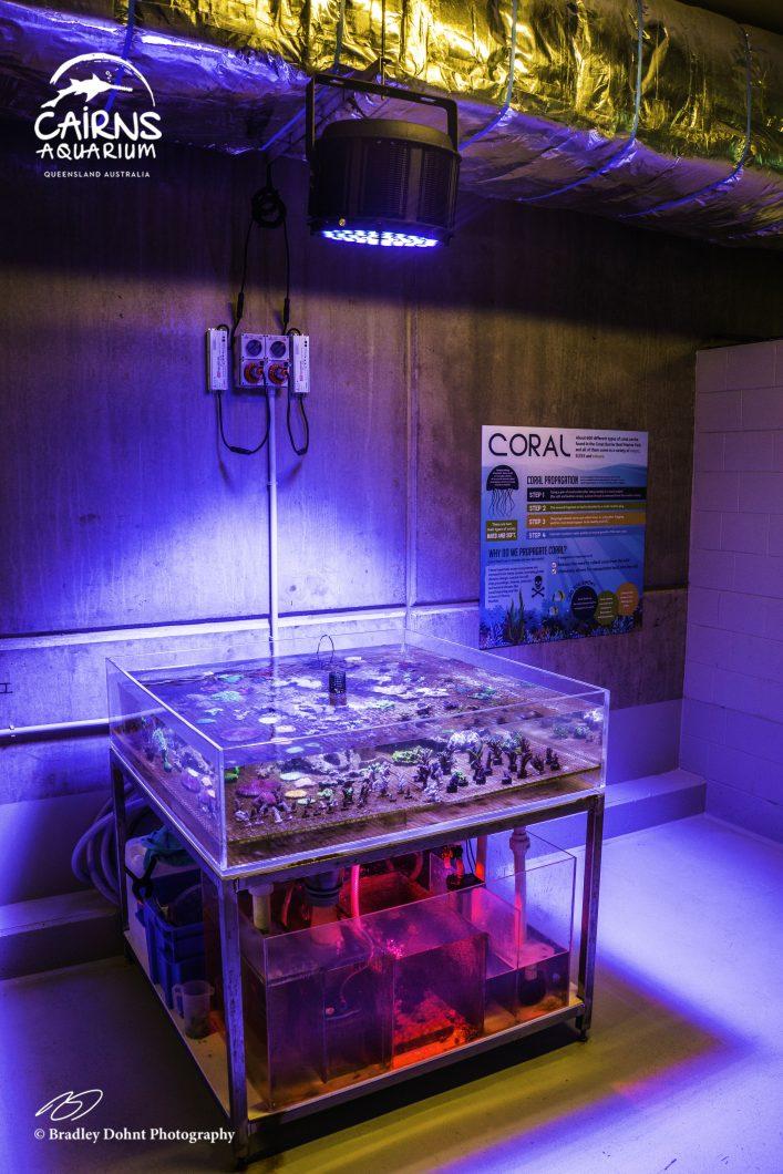 освещение аквариума с морской водой