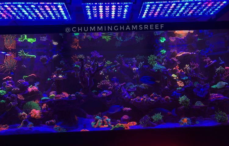 תאורת LED אקווריום מים מלוחים הטוב ביותר 2020
