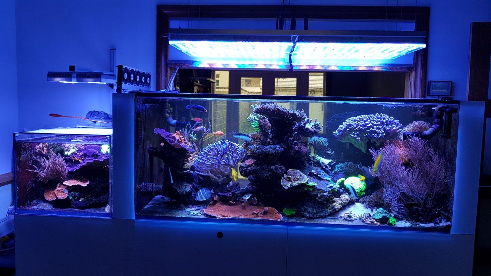 Akuarium terumbu pencahayaan LED terbaik 2020
