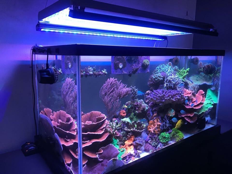 colorido tanque de arrecife orphek iluminación LED