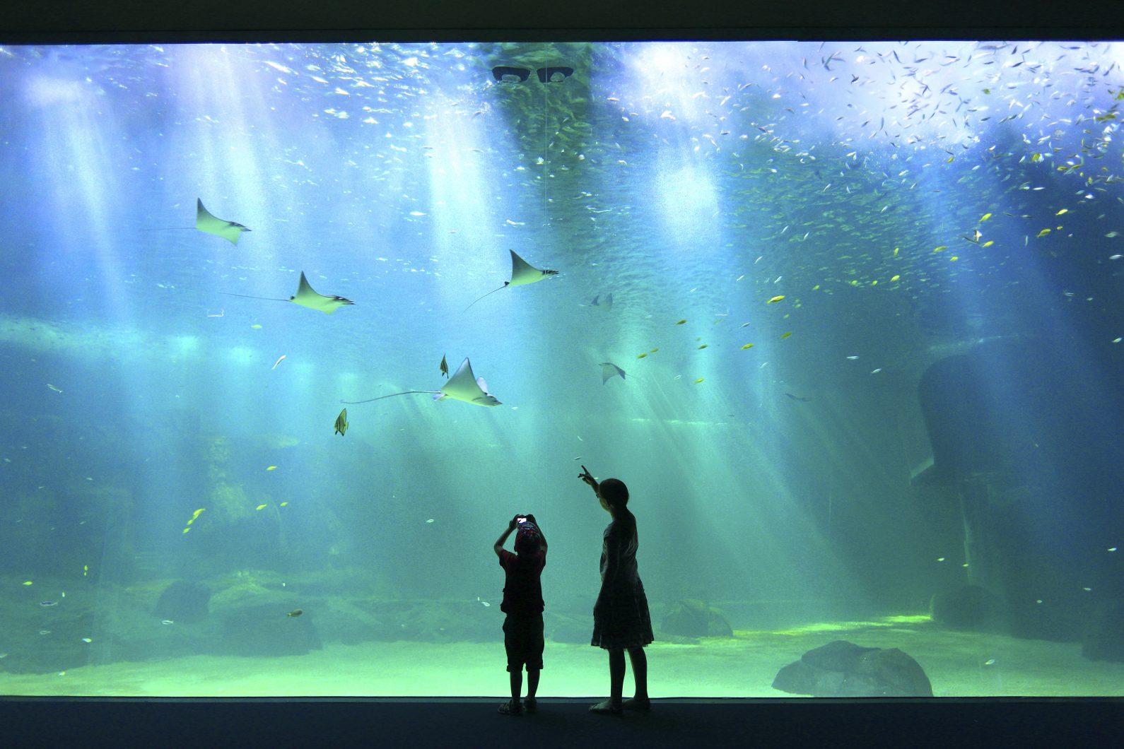величезне громадське освітлення акваріума