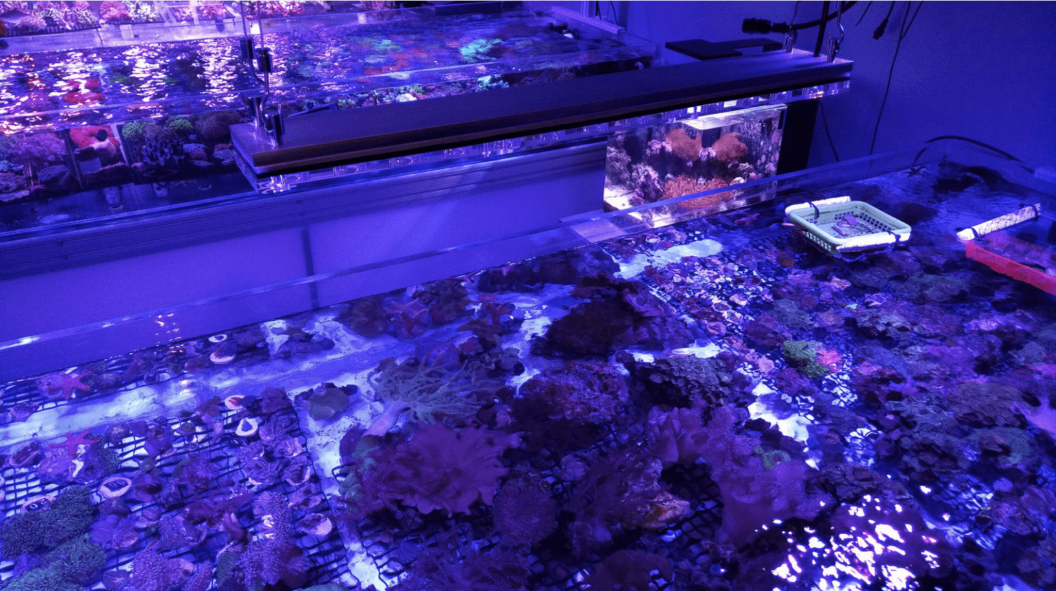 best reef coral aquarium lighting