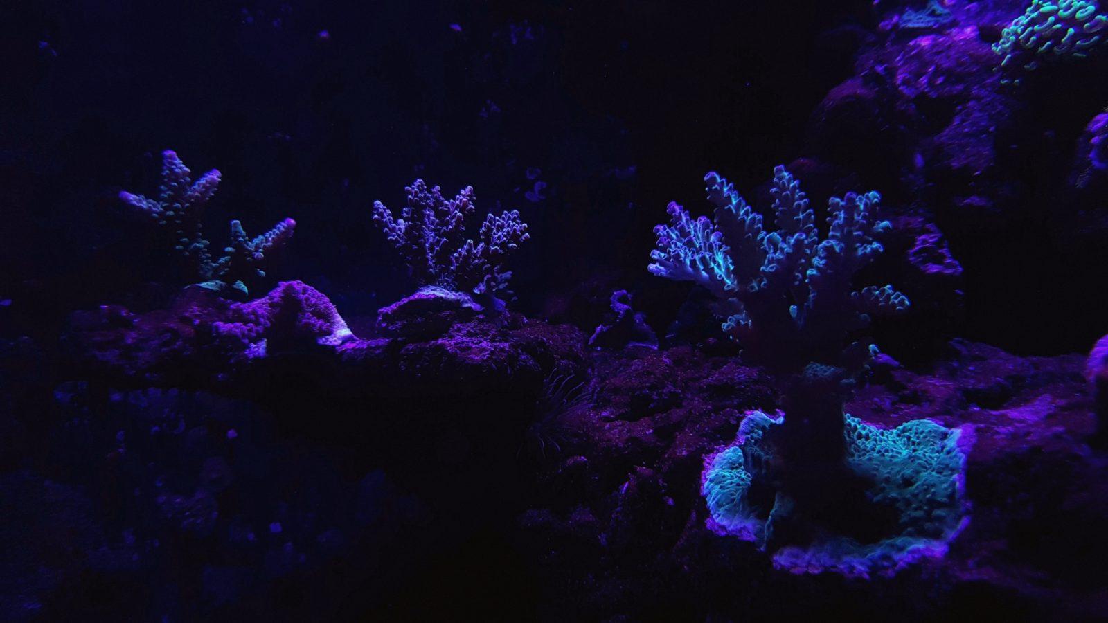 melhores cores de coral iluminação led