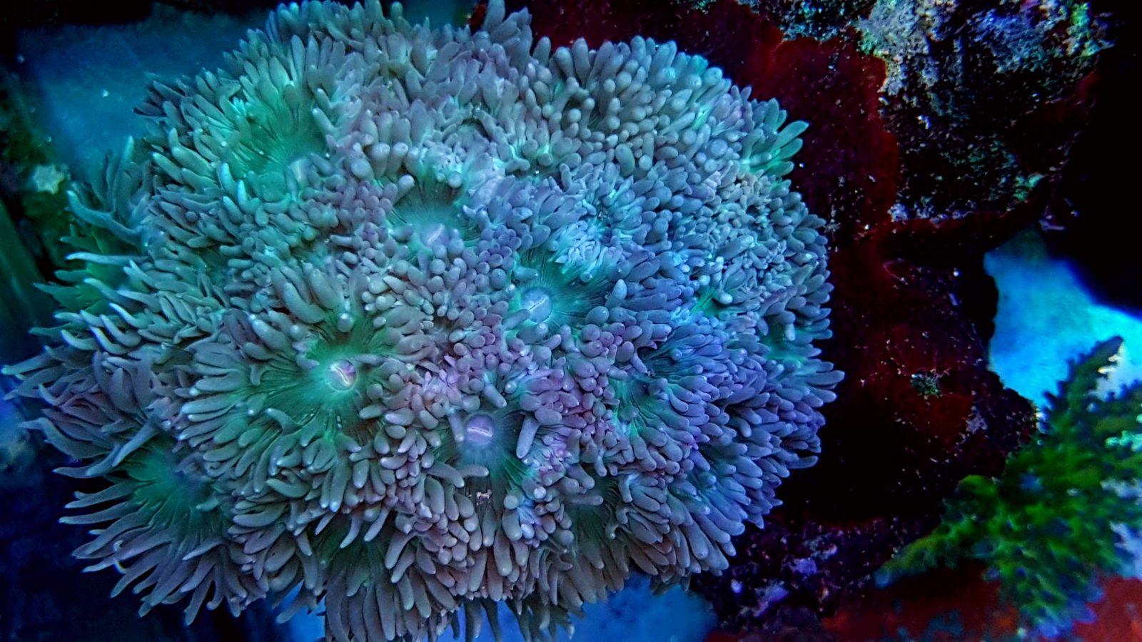 o tanque bonito do recife conduziu luzes