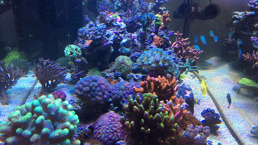 corais bonitos do tanque do recife