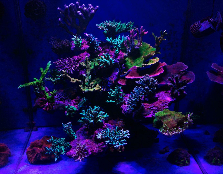 サンゴに最適なリーフアクアリウムの照明